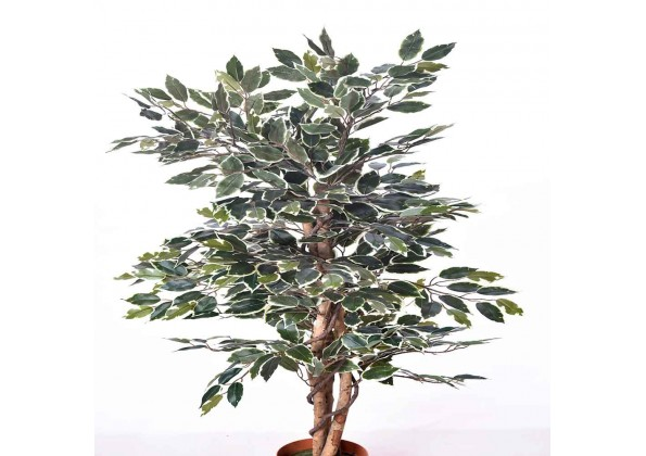 An Artificial FICUS Tree