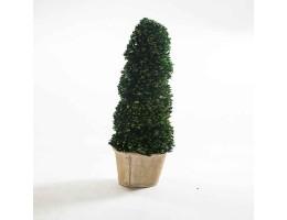 نبات مجفف شكل مخروطي