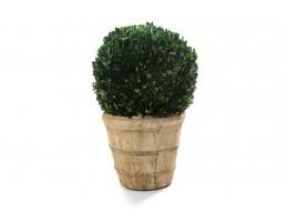 نبات مجفف شكل كروي