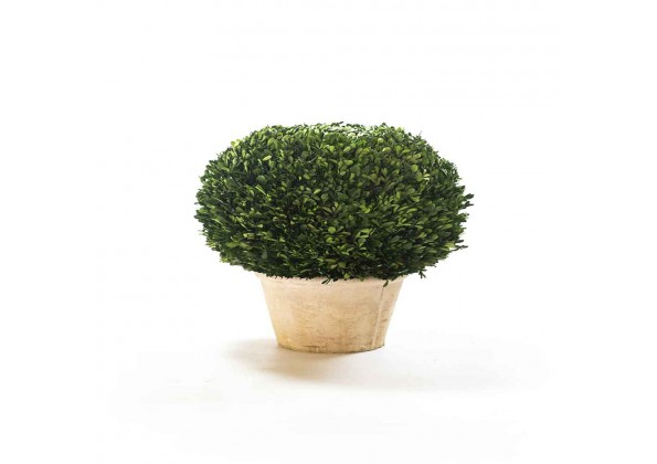A Spherical Dried Plant