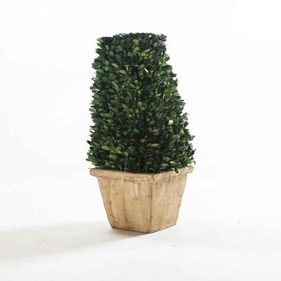 نبات مجفف شكل مخروطي محفوف من اعلى