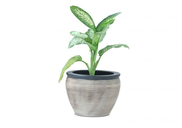 Light Brown Pot With Engraved Edges With Black Color