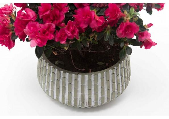 Circular Cement Pot