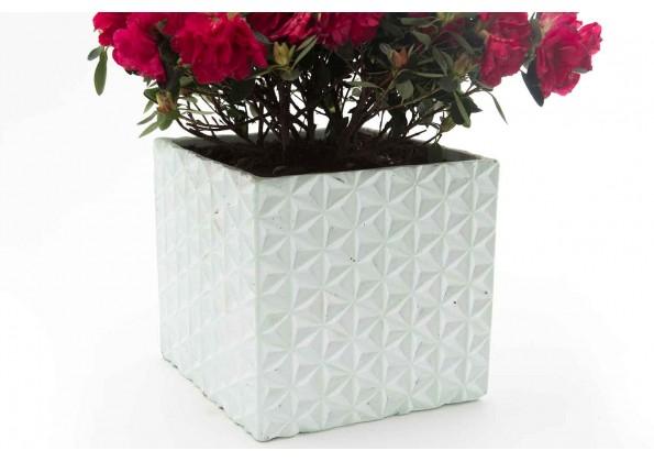 Square Cement Pot