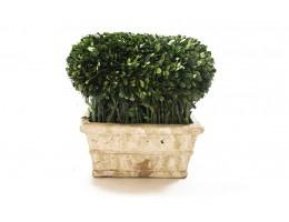 نبات مجفف شكل مربع