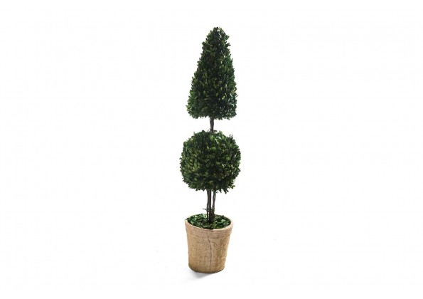 نبات مجفف شكل كروي ومخروطي