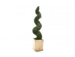 نبات مجفف شكل لولبي