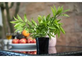 نبتة صناعية خضراء