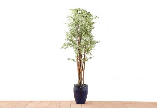 نبات صناعي VARIEGATED FICUS 6231LVS