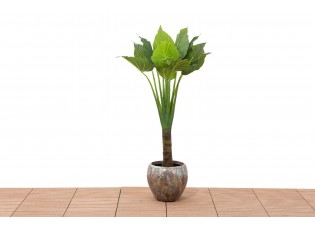 نبات صناعي CALADIUM 13LVS