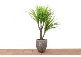 نبات صناعي DRACENEA 200LVS
