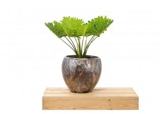 نبات صناعي CALADIUM 12LVS