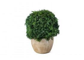 نباتات صناعيه مجففة