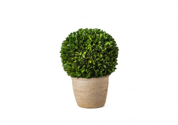 نباتات طبيعية مجففة