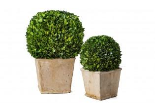 نباتات صناعيه شكل كروي