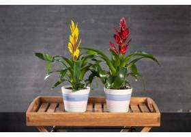 نباتات مزرعة جاهزة للبيع