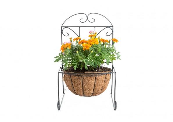 نباتات متنوعة مع كرسي وندسور