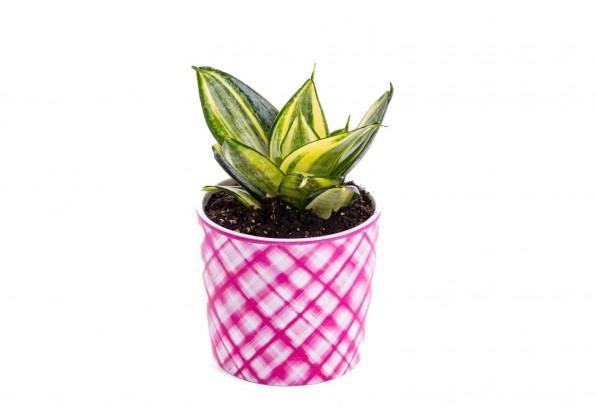 نباتات داخلية  مزروعة جاهزة