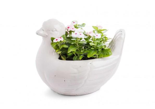 نباتات خارجية  مزروعة جاهزة