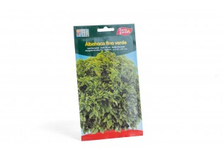 ريحان أخضر رفيع الورق