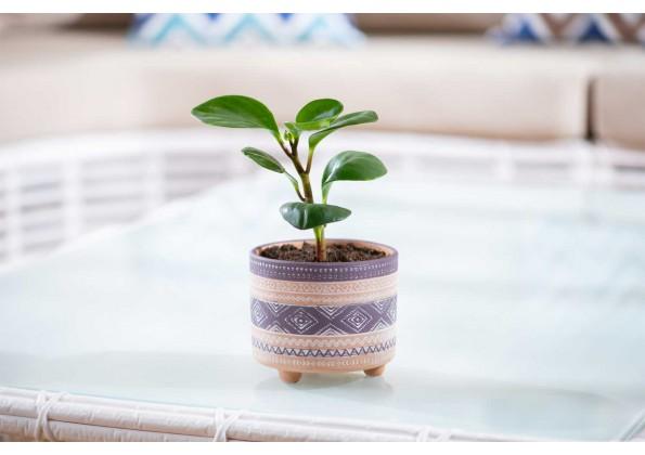نباتات مزروعة جاهزة